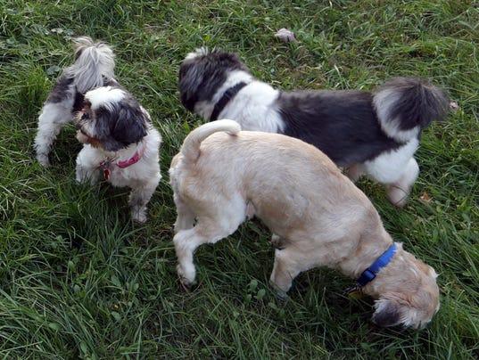 WDH 0930 Dog Rescue