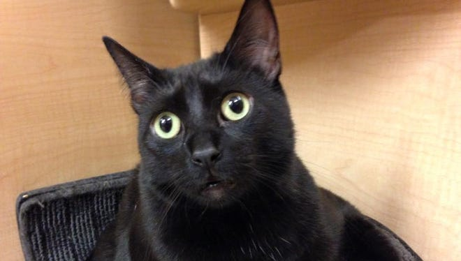 Pansy is sweet and friendly, and she's looking for a good home.