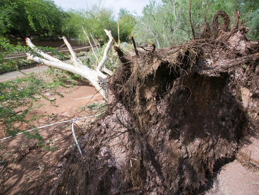 Phoenix Zoo closed after storm