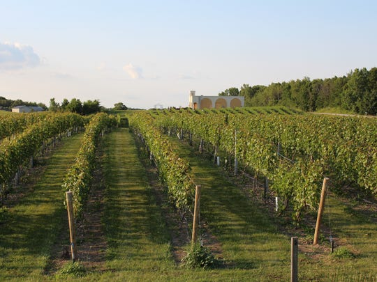 Grape vines at Parallel 44 Vineyard & Winery near Stangleville.