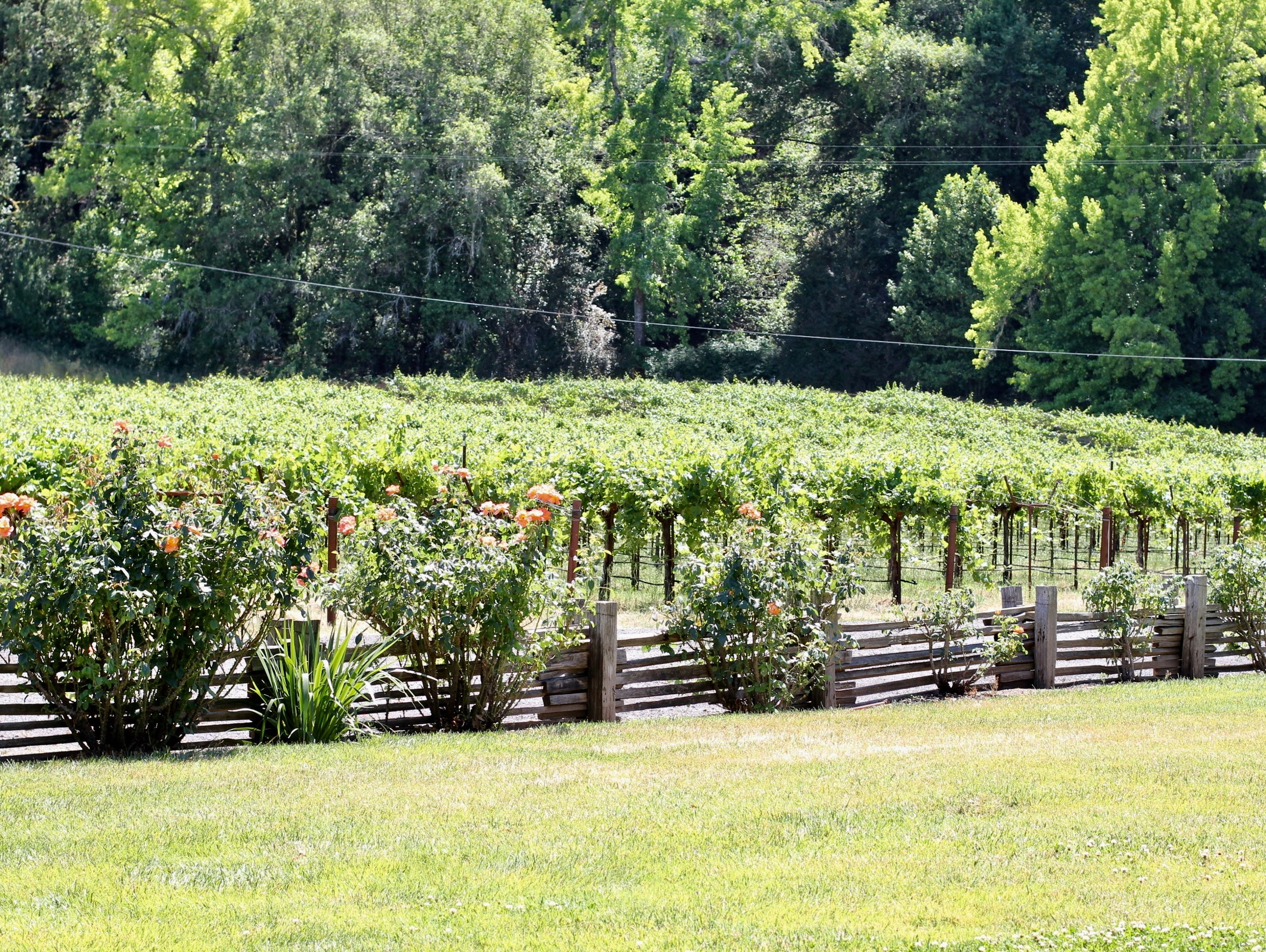 A vineyard block stretches west at MacMurray Estate