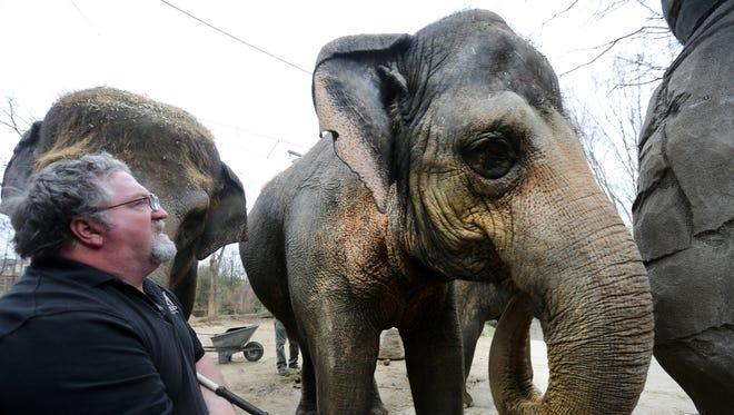 Schottzie, who turns 39 on Monday, stand with Cecil Jackson Jr., the elephant manager at the Cincinnati Zoo and Botanical Garden.