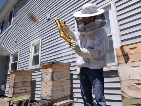 Gabe Lopez shows a portion of one of his hives last