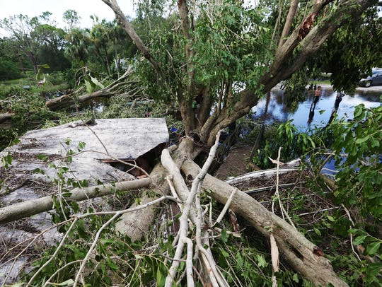 Hurricane Irma felled hundreds of large trees in Suncoast