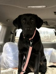 Precious cargo. Dakota on her way to the vet.
