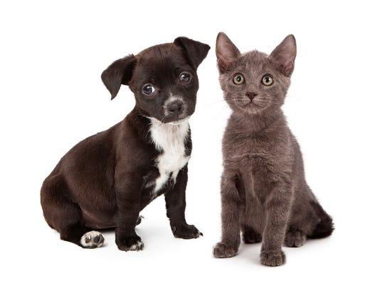 dogscats.jpg