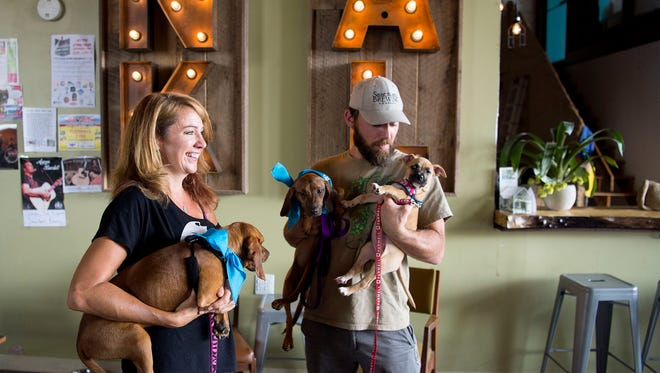 Co-owners of Sanctuary Brewing Lisa McDonald and Joe Dinan hold regular pet adoptions at the Hendersonville taproom.