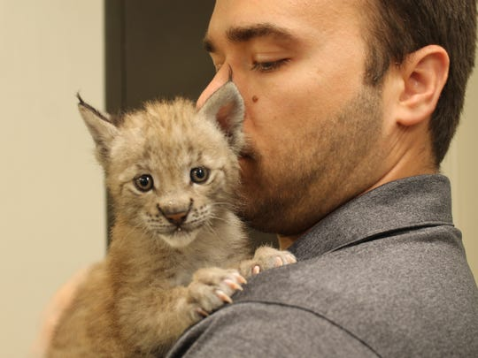 One of the Eurasian lynx cubs who recently arrived at Six Flags Great Adventure in Jackson.