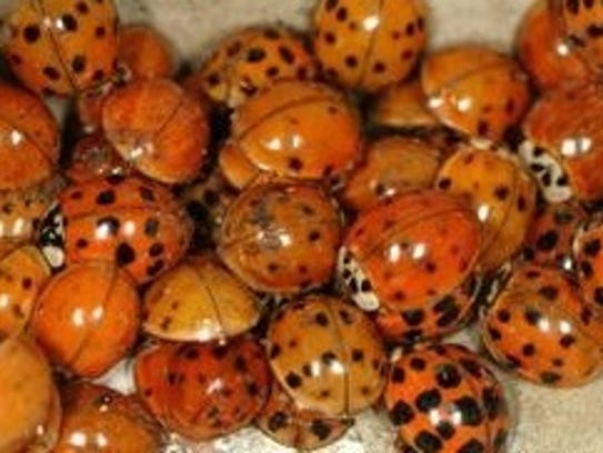 Bug Proof Your House Before Autumn