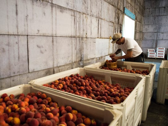 Peach grower Tom Holtzhauser puts together an order