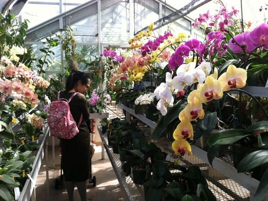 Orchids create a profusion of color in the greenhouses of at Hillwood Estate, Museum and Gardens in Washington, D.C.