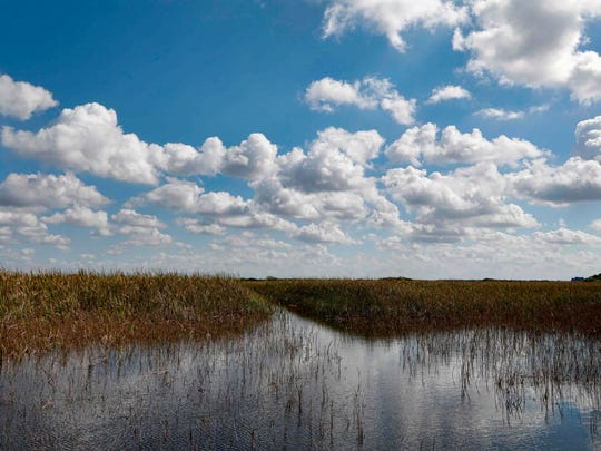 Clouds are reflected in the Florida Everglades, otherwise