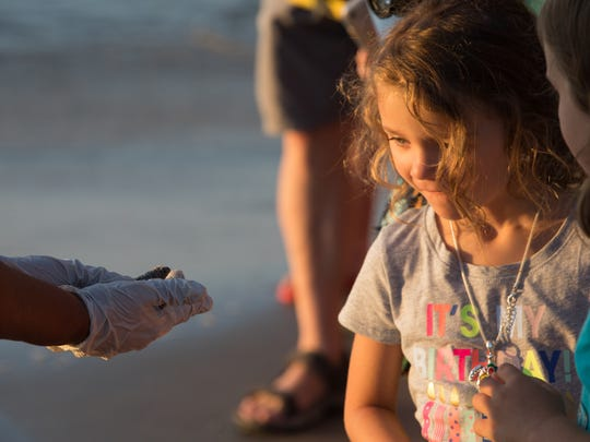 A spectator looks at a Kemp's ridley sea turtle hatchling during Padre Island National Seashore's first public release of 2017 on Wednesday, June 7, 2017.