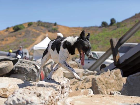 Rocket demonstrates search techniques at the National