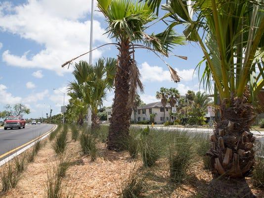 636644140080929212-palm-trees-4.jpg
