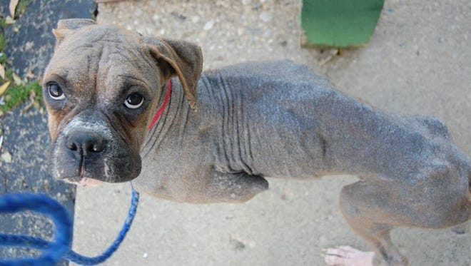 """A """"before"""" shot of Gabbie the dog when she came to HELP the Animals."""