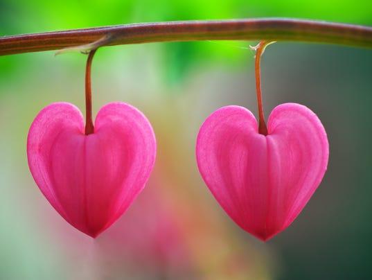 love heart shaped flowerflower - photo #11