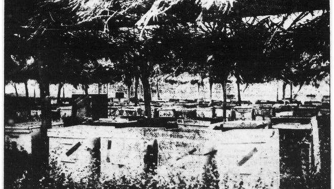 J.M. Herman's hives at his apiary in Chandler.