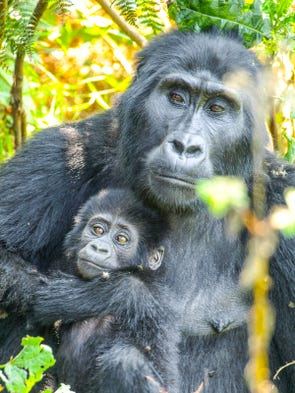 Uganda: One of only three countries in the world where