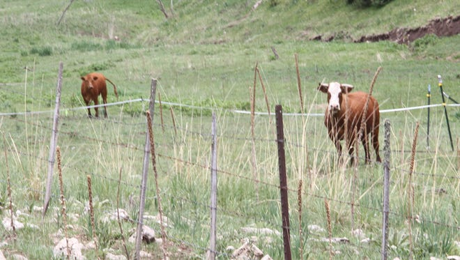 Lincoln National Forest officials placed electric fences in areas within the forest to prevent cattle from entering areas in the LNF to protect the New Mexico jumping mouse.