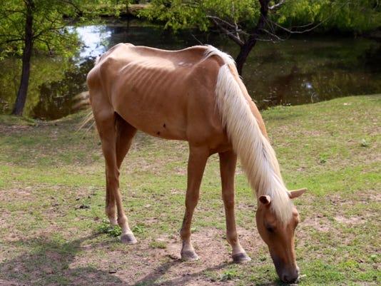 js-0729-horses-03