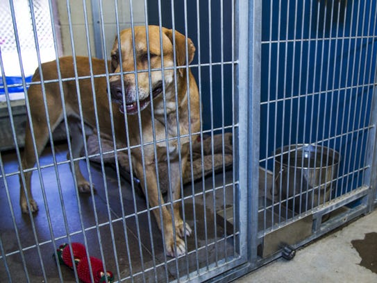 Hundreds of animals await adoption at the Maricopa