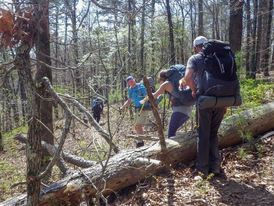 Trees downed by recent windstorms added to our trail