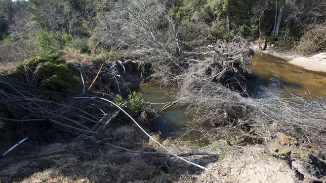Erosion and logjams clog sections of Carpenter Creek in this January photo. In its preliminary scores, the RESTORE Advisory Committee scored a proposal to restore ecosystem functionality and improve water quality in Carpenter Creek and Bayou Texar second overall.