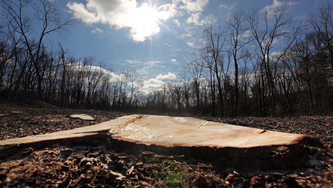 A stump in the East Fork Wildlife Area was left when a tree was cut down because it was deemed a host tree to the Asian longhorned beetle.