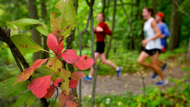 Just a few leaves have begun the transformation to their fall color palette as members of the St. John's University cross country team finish out a 6-mile training run Wednesday on the trails around Lake Sagatagan in Collegeville.