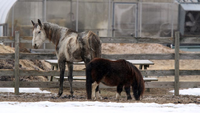 More than 200 animals, many sick and malnourished, were found on a farm in Millstone Township, N.J., authorities said.