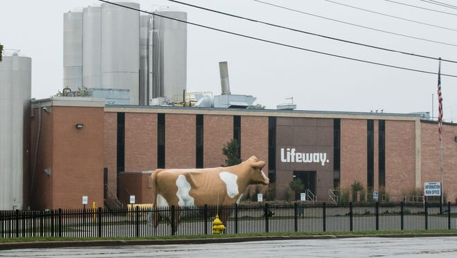 A giant cow graces the front lawn a the old Golden Guernsey dairy in Waukesha. A huge chicken outside the S&R Egg Farm property on Highway 59 was recently removed to stabilize its mounting.