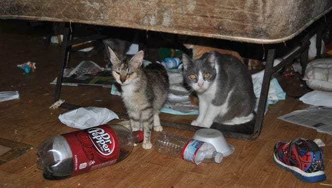 Seventy animals were rescued from a residence in Greenfield, SPCA officers said. Only 44 survived.