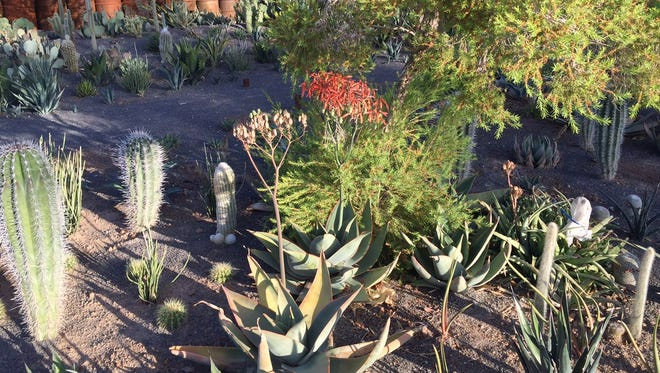 Tim Bishop of Phoenix is growing plants on a rental he owns to possibly sell at a nursery he is planning at 1802 E. Indian School Road.