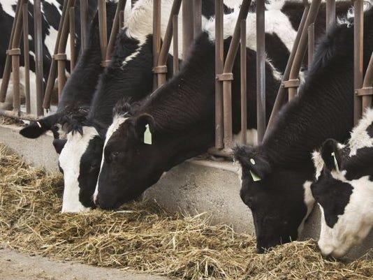 cow eat MJSBrd-03-24-2017-Farmer-1-A001-2017-03-23-IMG-cows-eating.JPG-1-1-CJHPF5SH-L995499359-IMG-cows-eating.JPG-1-1-CJHPF5SH.jpg