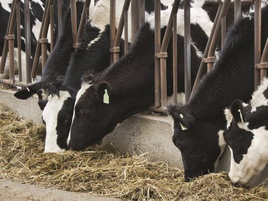 Cropp noted that dairy production also hinges on the feed that goes into dairy cows and wet weather for making hay and corn silage could affect production in traditional dairy regions of the United States.