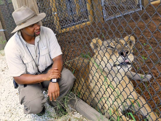"Kevin ""Simba"" Wiltz, CEO and senior vice president of Central Florida Animal Reserve, watches Kola the African lioness at her Osceola County enclosure."