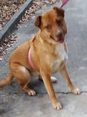 Ellie Mae is a young, spayed, female terrier mix. She