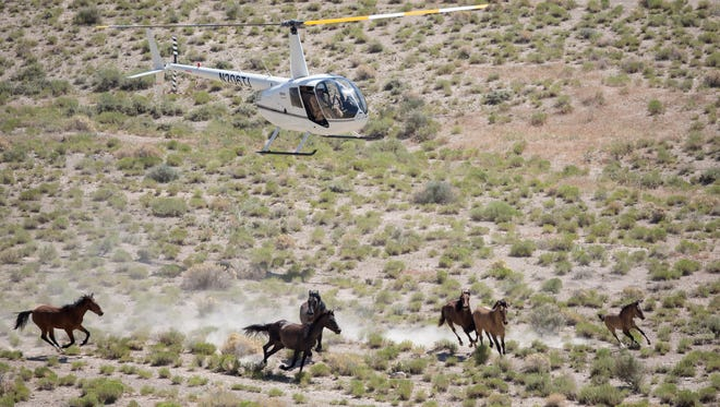 A BLM-contracted helicopter crew rounds up some of 257 horses taken from western Utah's Conger Herd in early July. Some would return to the range as subjects in a fertility and behavior study, while others headed into captivity, where a federally appointed committee now recommends selling or euthanizing those that can't be adopted.