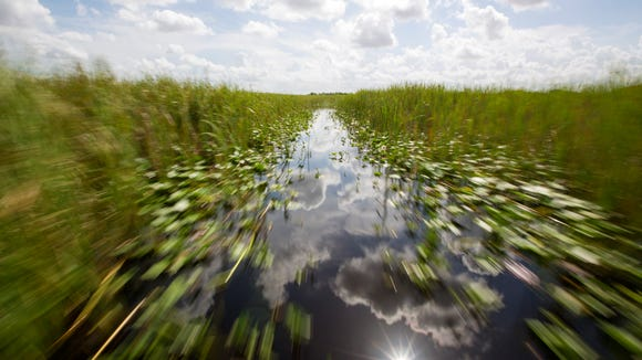 The swamp passes by in a blur during an airboat ride at Everglades Holiday Park in Fort Lauderdale, Florida, on Friday, July 21, 2017.