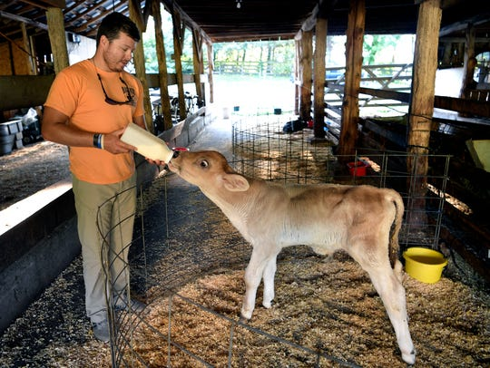 Charles Hatcher bottle feeds a calf mile on his family
