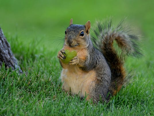 635731669118947581-jean.gilson.city.park.squirrel