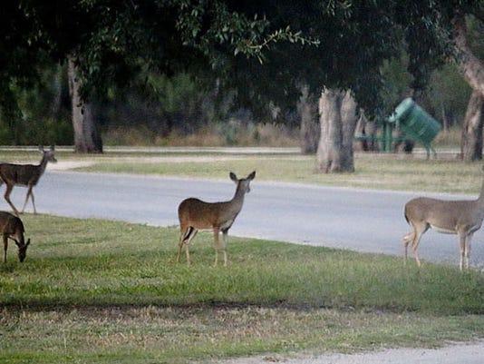 Deer-SpringCreek-04.jpg