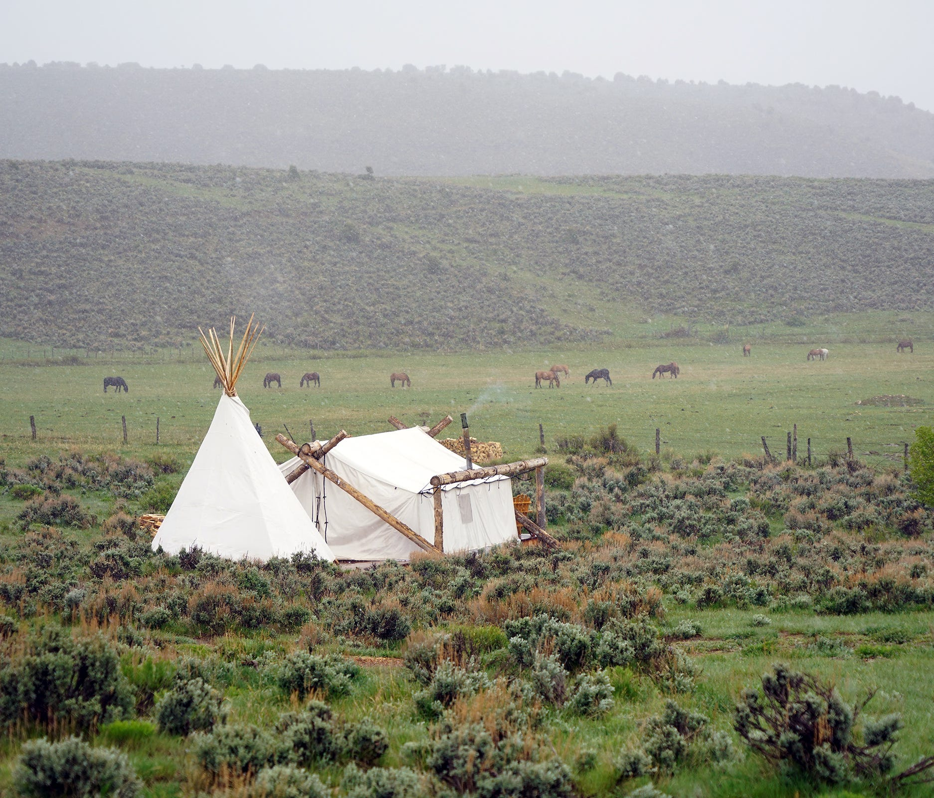 A Collective Retreats tent sits alone in a Colorado mountain meadow as horses graze in the distance.