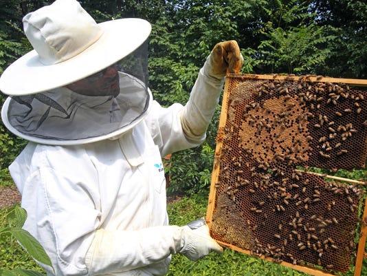 Greenburgh Bees