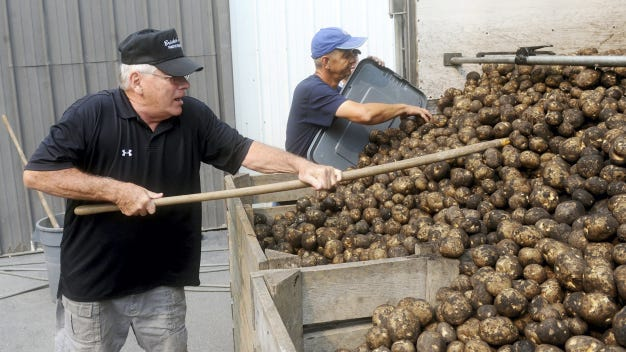 Don Bricker, owner of Bricker's French Fries, uses a rake to help pull potatoes off of a rolling truck into two crates as he helps unload between 40,000 and 50,000 pounds at his West Manchester Township business.