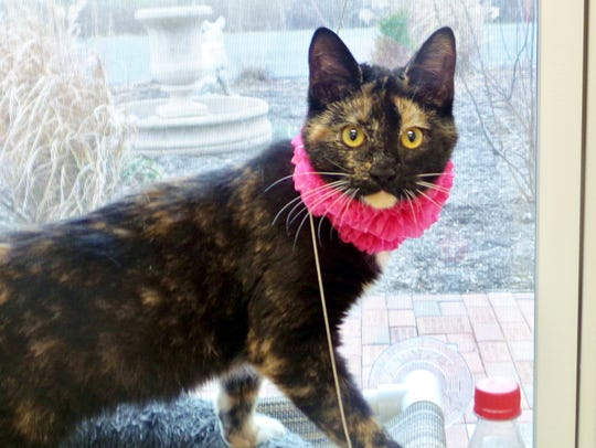 LuLu is a 6-month-old tortie-with-white girl who loves