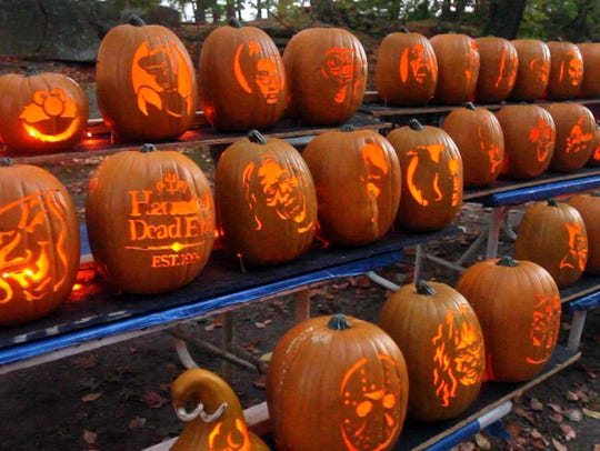 Rows of Jack O' Lanterns at The Haunt at Rocky Ledge,