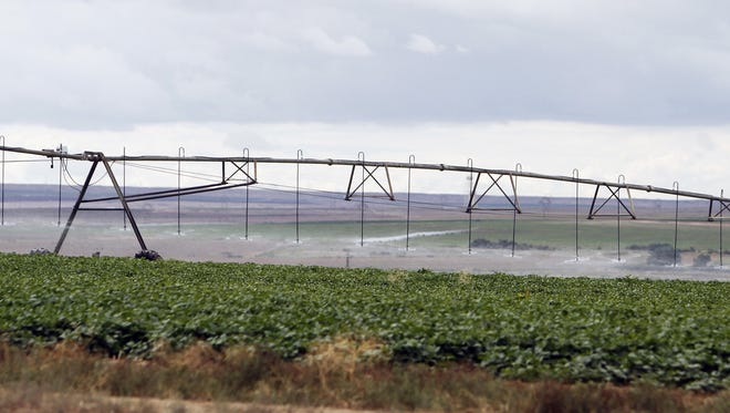 In this file photo, crops are watered at the Navajo Agricultural Products Industry's farm south of Farmington, N.M. When the federal government announced it would allow American Indian tribes to grow and sell marijuana, the same discussions many had about casinos and alcohol resurfaced.