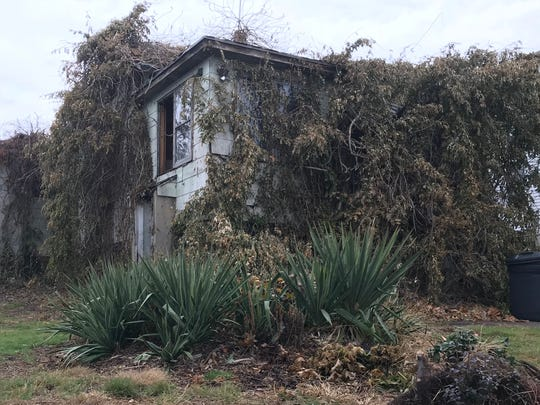 This home at 335 Ralph St. in Belleville remains overgrown